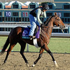 Caption: Boxeur Des<br /> Breeders' Cup morning works at Santa Anita near Arcadia, California, on Oct. 28, 2012.<br /> BCRACES2012 WorksSunday2 image 860<br /> Photo by Anne M. Eberhardt