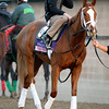 Caption: Tara from the Cape<br /> Breeders' Cup morning works at Santa Anita near Arcadia, California, on Oct. 31, 2012.<br /> BCRACES2012 WorksWed2 image403<br /> Photo by Anne M. Eberhardt