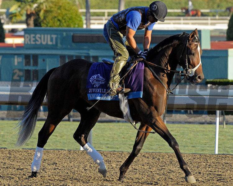 Caption: Know More<br /> Breeders' Cup morning works at Santa Anita near Arcadia, California, on Oct. 29, 2012.<br /> BCRACES2012 WorksMonday1 image246<br /> Photo by Anne M. Eberhardt