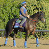 Caption: Title Contender<br /> Breeders' Cup morning works at Santa Anita near Arcadia, California, on Oct. 30, 2012.<br /> BCRACES2012 WorksTues2 image222<br /> Photo by Anne M. Eberhardt