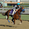 Caption: Almudena<br /> Breeders' Cup morning works at Santa Anita near Arcadia, California, on Oct. 31, 2012.<br /> BCRACES2012 WorksWed2 image786<br /> Photo by Anne M. Eberhardt