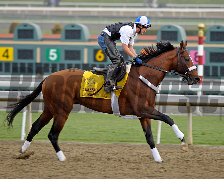 Caption: Mucho Macho Man<br /> Breeders' Cup morning works at Santa Anita near Arcadia, California, on Oct. 31, 2012.<br /> BCRACES2012 WorksThurs2 image197<br /> Photo by Anne M. Eberhardt