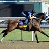 Caption: Class Included, Ladies Classic<br /> Breeders' Cup morning works at Santa Anita near Arcadia, California, on Oct. 28, 2012.<br /> BCRACES2012 WorksSunday2 image950<br /> Photo by Anne M. Eberhardt