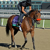 Caption: South Floyd<br /> Breeders' Cup morning works at Santa Anita near Arcadia, California, on Oct. 29, 2012.<br /> BCRACES2012 WorksMonday1 image582<br /> Photo by Anne M. Eberhardt