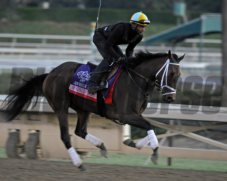 Caption: Spring in the Air<br /> Breeders' Cup morning works at Santa Anita near Arcadia, California, on Oct. 29, 2012.<br /> BCRACES2012 WorksMonday1 image069<br /> Photo by Anne M. Eberhardt