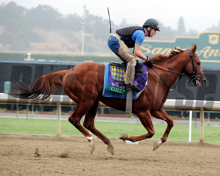 Coil<br /> Breeders' Cup 2012<br /> Photo by Dave Harmon