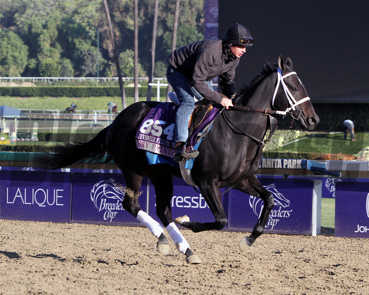 Sky Painter Breeders' Cup Filly & Mare Turf Chad B. Harmon