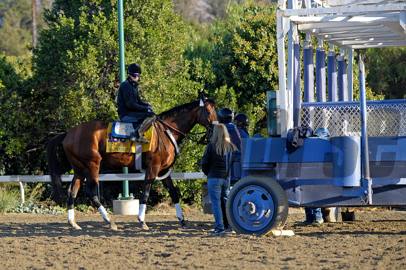 Caption:  Mucho Macho Man practises at the gate<br /> Breeders' Cup horses and connections at Santa Anita near Acadia, California, preparing for Breeders' Cup raceways on Nov. 1 and Nov. 2, 2013.<br /> BCWorks1Jpegs_10_29_13 image532<br /> Photo by Anne M. Eberhardt