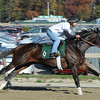 Ron the Greek - Belmont Park Work, October 26, 2013.<br /> Coglianese Photos