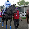 Caption:  The Fugue<br /> Breeders' Cup horses and connections at Santa Anita near Acadia, California, preparing for Breeders' Cup raceways on Nov. 1 and Nov. 2, 2013.<br /> BCWorks1Jpegs_10_29_13 image353<br /> Photo by Anne M. Eberhardt