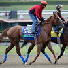 Caption:  Book Review<br /> Breeders' Cup horses and connections at Santa Anita near Acadia, California, preparing for Breeders' Cup raceways on Nov. 1 and Nov. 2, 2013.<br /> BCWorks01Jpegs_10_28_13 image136<br /> Photo by Anne M. Eberhardt