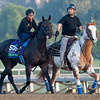 Caption:  Points Offthebench with Mike Smith the morning of his breakdown on Oct. 26, 2013<br /> Breeders' Cup horses and connections at Santa Anita near Acadia, California, preparing for Breeders' Cup raceways on Nov. 1 and Nov. 2, 2013.<br /> BCWorks01_10_26_13 RAWimage615<br /> Photo by Anne M. Eberhardt