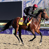 Declaration Of War Breeders' Cup Classic Chad B. Harmon