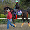 Caption:  Trinniberg<br /> Breeders' Cup horses and connections at Santa Anita near Acadia, California, preparing for Breeders' Cup raceways on Nov. 1 and Nov. 2, 2013.<br /> BCWorks1Jpegs_10_29_13 image366<br /> Photo by Anne M. Eberhardt