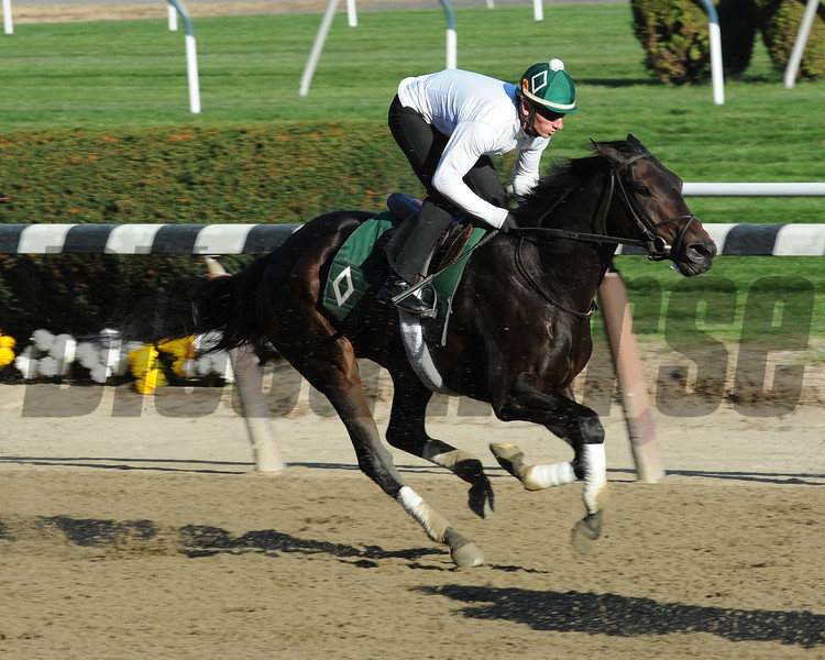 Close Hatches Works at Belmont Park on October 26, 2013.<br /> Coglianese Photos