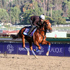 Smarty's Echo Breeders' Cup Juvenile Chad B. Harmon