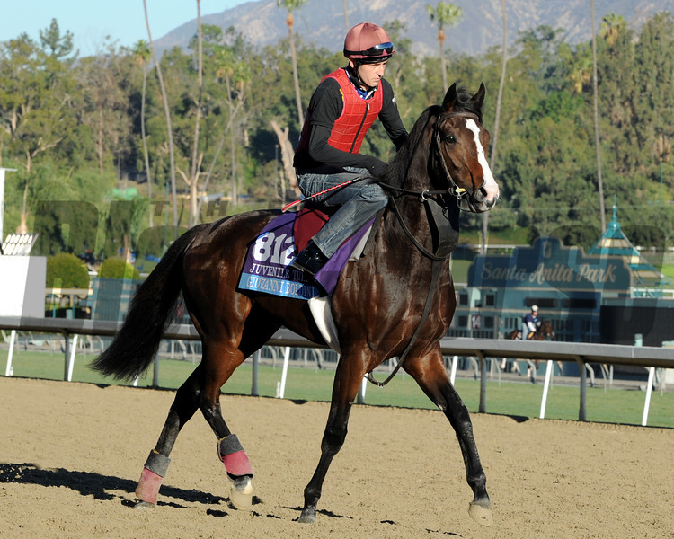 Giovanni Boldini - 2013 Breeders' Cup<br /> Dave Harmon Photo