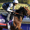 Caption:  Alterite<br /> Breeders' Cup horses and connections at Santa Anita near Acadia, California, preparing for Breeders' Cup raceways on Nov. 1 and Nov. 2, 2013.<br /> BCWorks1Jpegs_10_30_13 image315<br /> Photo by Anne M. Eberhardt
