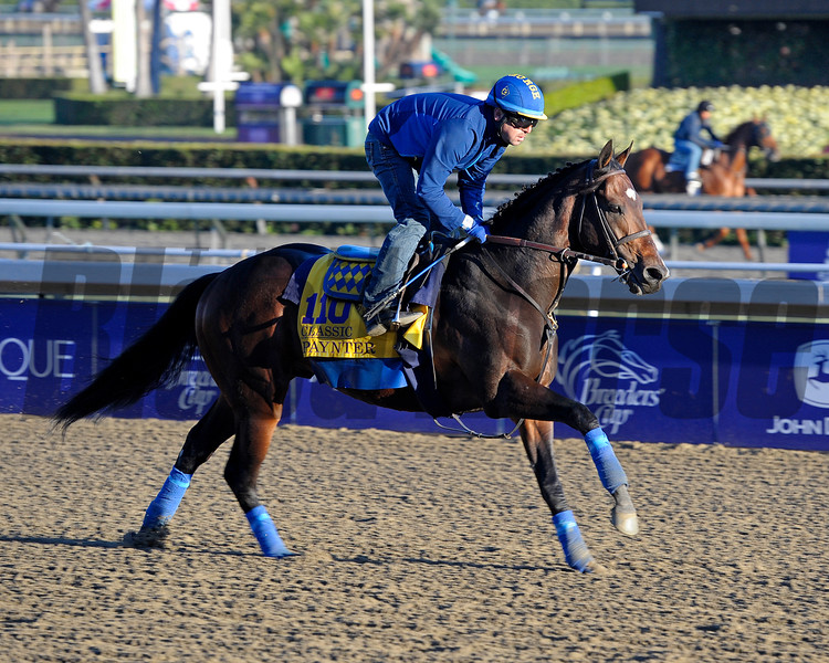 Caption:  Paynter<br /> Breeders' Cup horses and connections at Santa Anita near Acadia, California, preparing for Breeders' Cup raceways on Nov. 1 and Nov. 2, 2013.<br /> BCWorks1Jpegs_10_31_13 image657<br /> Photo by Anne M. Eberhardt