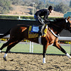 Mucho Macho Man<br /> Dave Harmon Photo