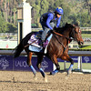 Fed Biz Breeders' Cup Dirt Mile Chad B. Harmon