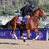 Vagabond Shoes Breeders' Cup Turf Chad B. Harmon
