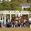 Royal Delta Breeders' Cup Distaff Chad B. Harmon