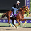 Indian Jones Breeders' Cup Marathon Chad B. Harmon