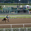 Caption:  Game on Dude<br /> Breeders' Cup horses and connections at Santa Anita near Acadia, California, preparing for Breeders' Cup raceways on Nov. 1 and Nov. 2, 2013.<br /> BCWorks02RAW_10_28_13 image403<br /> Photo by Anne M. Eberhardt