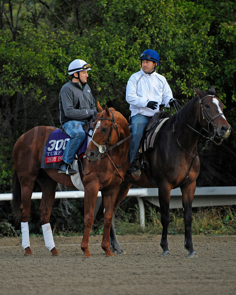 Caption:  Indy Point<br /> Breeders' Cup horses and connections at Santa Anita near Acadia, California, preparing for Breeders' Cup raceways on Nov. 1 and Nov. 2, 2013.<br /> BCWorks1Jpegs_10_29_13 image346<br /> Photo by Anne M. Eberhardt