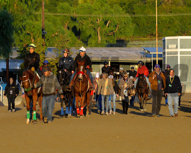 The Fugue (next to pony with red shadow roll) walks to the track with trainer John Gosden, second right. Caption:  <br /> Breeders' Cup horses and connections at Santa Anita near Acadia, California, preparing for Breeders' Cup raceways on Nov. 1 and Nov. 2, 2013.<br /> BCWorks3Jpegs_10_30_13 image<br /> Photo by Anne M. Eberhardt