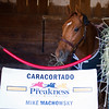 Caption:  Caracortado<br /> Breeders' Cup horses and connections at Santa Anita near Acadia, California, preparing for Breeders' Cup raceways on Nov. 1 and Nov. 2, 2013.<br /> BCWorks03RAW_10_30_13 image449<br /> Photo by Anne M. Eberhardt