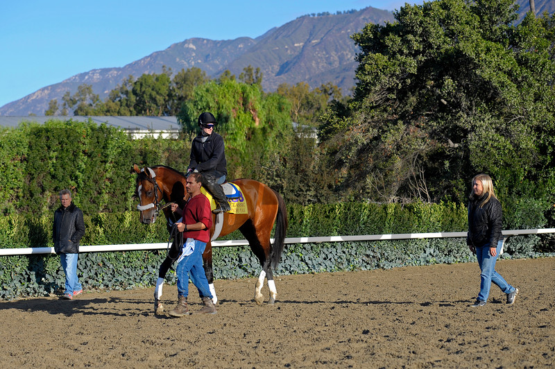 Caption:  Mucho Macho Man with trainer Kathy Ritvo after practising at the gate. Husband Tim Ritvo at left. <br /> Breeders' Cup horses and connections at Santa Anita near Acadia, California, preparing for Breeders' Cup raceways on Nov. 1 and Nov. 2, 2013.<br /> BCWorks1Jpegs_10_29_13 image539<br /> Photo by Anne M. Eberhardt