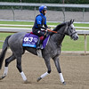 Caption:  Outstrip<br /> Breeders' Cup horses and connections at Santa Anita near Acadia, California, preparing for Breeders' Cup raceways on Nov. 1 and Nov. 2, 2013.<br /> BCWorks01Jpegs_10_28_13 image271<br /> Photo by Anne M. Eberhardt