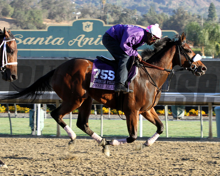 Sweet Reason Breeders' Cup Juvenile Fillies Chad B. Harmon