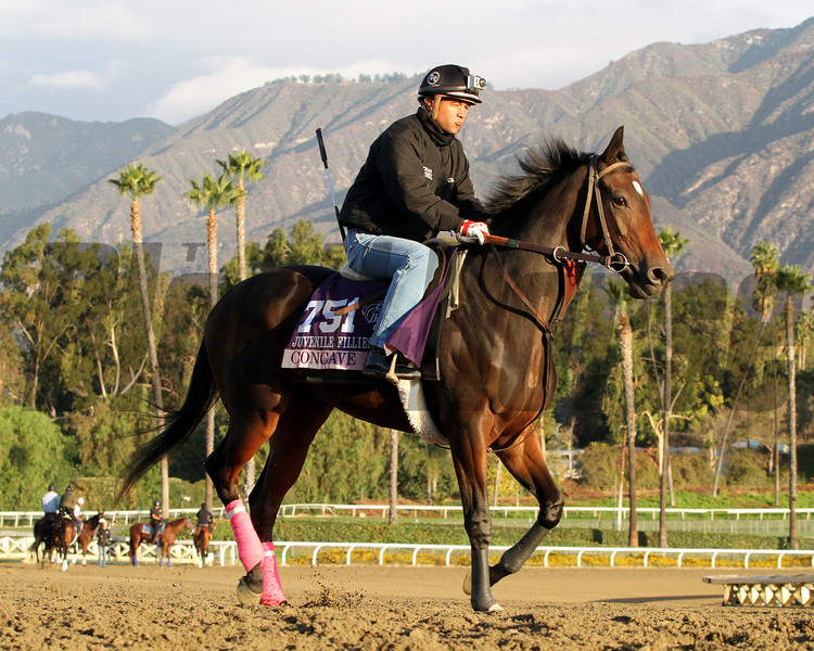 Concave Breeders' Cup Juvenile Fillies Chad B. Harmon