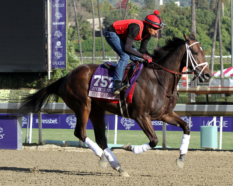 My Conquestadory Breeders' Cup Juvenile Fillies Turf Chad B. Harmon