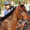 Game On Dude Breeders' Cup Classic Chad B. Harmon