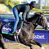 Caption:  Bahamian Squall<br /> Breeders' Cup horses and connections at Santa Anita near Acadia, California, preparing for Breeders' Cup raceways on Nov. 1 and Nov. 2, 2013.<br /> BCWorks1Jpegs_10_30_13 image396<br /> Photo by Anne M. Eberhardt