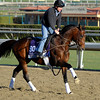 Caption:  Worldly<br /> Breeders' Cup horses and connections at Santa Anita near Acadia, California, preparing for Breeders' Cup raceways on Nov. 1 and Nov. 2, 2013.<br /> BCWorks1Jpegs_10_30_13 image415<br /> Photo by Anne M. Eberhardt