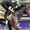 Flat Out Breeders' Cup Classic Chad B. Harmon