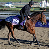 Caption:  Vorda<br /> Breeders' Cup horses and connections at Santa Anita near Acadia, California, preparing for Breeders' Cup raceways on Nov. 1 and Nov. 2, 2013.<br /> BCWorks1Jpegs_10_31_13 image915<br /> Photo by Anne M. Eberhardt