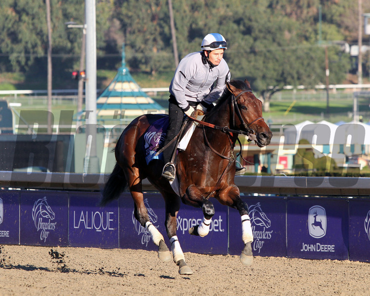 Medal Count Breeders' Cup Juvenile Chad B. Harmon