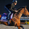 Caption:  Chriselliam<br /> Breeders' Cup horses and connections at Santa Anita near Acadia, California, preparing for Breeders' Cup raceways on Nov. 1 and Nov. 2, 2013.<br /> BCWorks3Jpegs_10_30_13 image986<br /> Photo by Anne M. Eberhardt