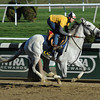 Za Approval - Belmont Park, October 26, 2013.<br /> Coglianese Photos