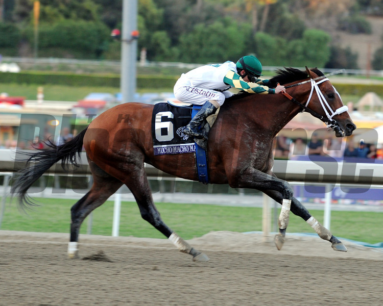 Mucho Macho Man wins the 2013 Breeders' Cup Classic.<br /> Dave Harmon Photo