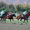Mucho Macho Man wins the Breeders' Cup Classic.<br /> Photo by Dave Harmon