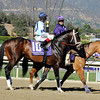 Verrazano, Breeders Cup Dirt Mile 2013<br /> Photo by Dave Harmon