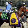 Goldencents wins the Breeders' Cup Dirt Mile at Santa Anita Race Track Nov. 1, 2013.  Photo by Skip Dickstein