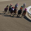 The horses came down the backstretch in the Breeders' Cup Filly & Mare Sprint (G. I). Photo by Crawford Ifland.